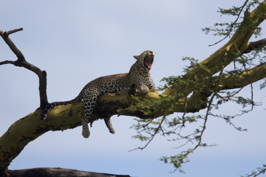 Big five safaris tanzania