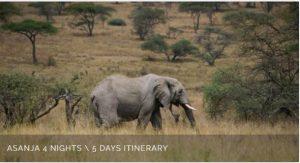 Asanja Serengeti Safaris